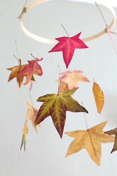 Have you ever wondered how to preserve leaves? We tried out two different methods- one using glycerin and one using wax paper. Here are our results and how you can try it yourself!
