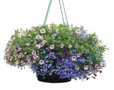 "10"" Hanging Basket $"