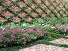 garden creativ, bee yard, confeder jasmin, jasmine trellis
