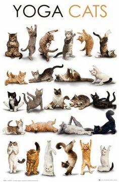 Yoga Cats!