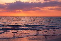 Captiva Island sunset