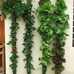 More vertical garden goodness, from la Bioguia on FB