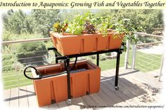 fish garden, grow fish, aquapon garden