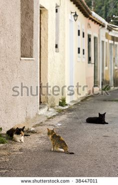 stock photo : three cats living in the streets of greek village at Corfu