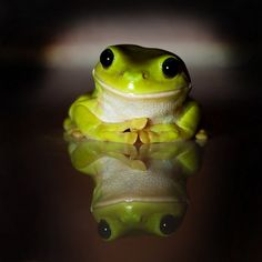 I love tree frogs!