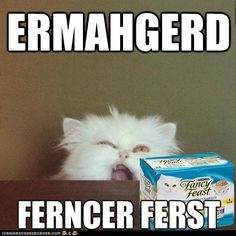 crazy cats, laugh, silly cats, the face, cat food, funny pictures, funni, funny kitties, cat memes