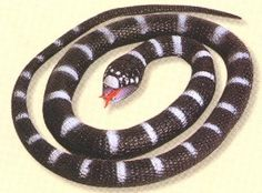 Small California King Snake at theBIGzoo.com, a family-owned gift shop with 12,000+ animal-themed items.