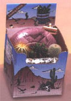 Cactus Planting Kit - This kit contain 3 cacti, a 4″ Southwestern designed ceramic planter, soil, decorative stones, and an Arizona sign. Everything you need for a small cactus desk garden. Now you can own a piece of the American Southwest! Desert Canyon Gifts presents a selection of Cactus Growing Kits. Most cactus planting kits come complete with cacti, the right type of soil, decorative pebbles, planter, and a unique Arizona sign. $32.95