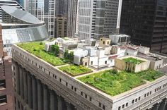 Chicago city hall green rooftop