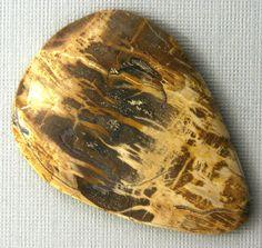 Petrified Wood Cabochon