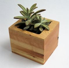 Box Succulent Planter in Cherry. BDJ Craftworks at #achristmasaffair.