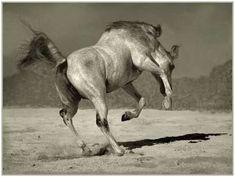 Arabian Horse Arabic Horses Tattoo The