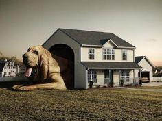 Una creativa casa para perro!