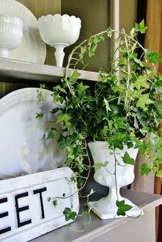 Shape a graceful ivy topiary with the help of a coat hanger.