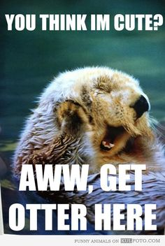 Otterly adorable. Sea otters, this just make me smile