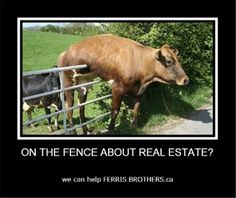 Go to http://wanelo.com/p/5131938/dog-ninja for real estate leads - Real Estate Humor