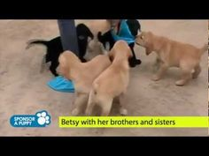 The Guide Dogs for the Blind Association (UK) is proud to share with you exclusive behind the scenes footage of the making of their new Sponsor a Puppy | Guide Dogs for the Blind Association TV advert