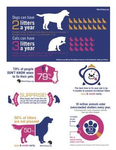Visit www.whentospay.org for more materials to promote spaying and neutering by four months to prevent unwanted litters! #WhenToSpay #spay #neuter