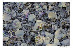 Cockatoo Island - Oyster shells & cups.