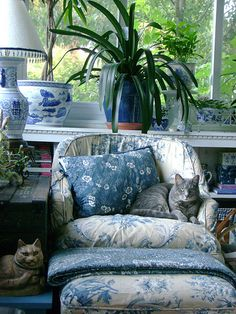 Sunroom reading nook--love the blue and white, plants and most of all Merrywether, the cat! Room and photo by Martha Cool.