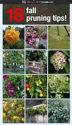 18 Pruning Tips curated by Sensible Gardening http://sensiblegardening.com/