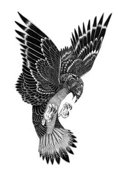 Bird of preypen and ink (2012)done by Iain macarthur