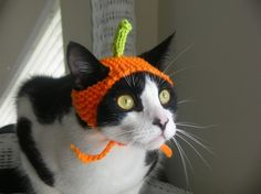 @Shirley Brice I need one of these for Koda!!!!