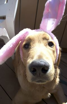 Easter Golden Retriever