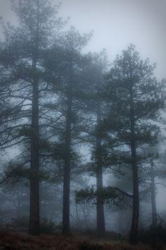 Fog  (by DanB.)