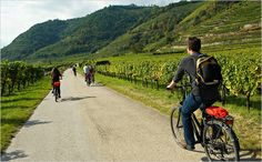 Take a bike tour through the beautiful vine yards in Wachau Valley, Lower Austria  #austria #loweraustria #wachau #vineyards #wine #biking #summer #visitaustria