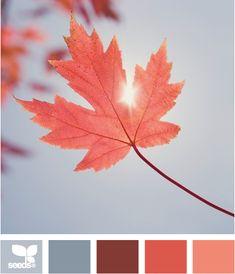 autumn hues