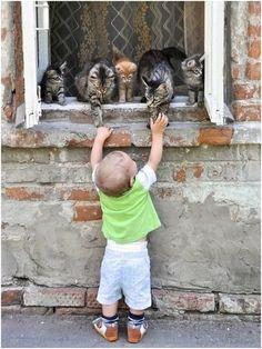 kitten, anim, cat, window, friend sayings, hello kitty, new friends, little boys, kid
