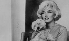 Marilyn Monroe and her Maltese terrier, Maf