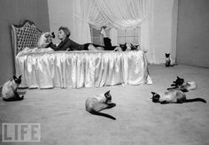 {Kim Novak & her Siamese co-stars} from movie Bell Book Candle - fun flick!