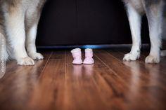maternity photography with dogs | Maternity · elizabeth photography; Ottawa, Canada