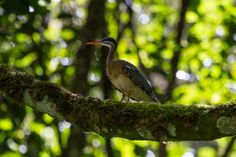 Our top wildlife sightings of 2013