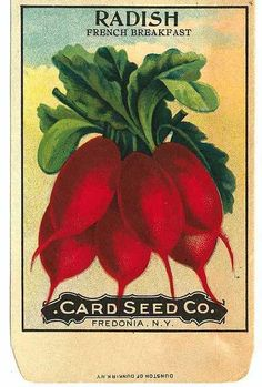 Radishes ~ seed packet