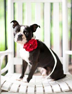 Satin Dog Collar Flower -