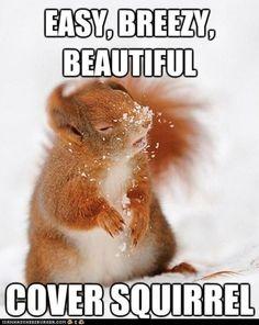 Haha, Squirrel.