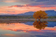 reflect photographi, inspir, beauti thing, reflect beauti