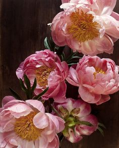 luscious pink peonies