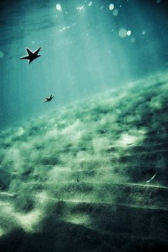 floating starfish