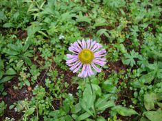 Wildflowers Colorado Nature  coloradohiking.org