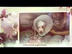 Heal This Puppy's Dislocated Hip, Heart and Home