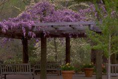 georgia garden, arbor, gardens, garden delight, flower