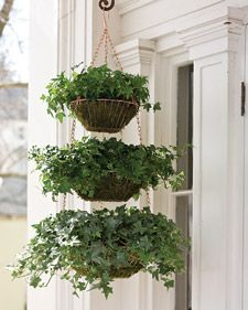 Create a verdant planter for your front porch using a trio of hanging wire baskets, sheet moss, and 2 containers of ivy.