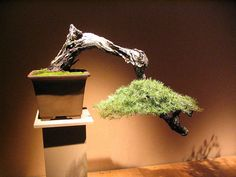 tattoo ideas, plant, bonsai trees, galleries, interior, crowns, green, art, design