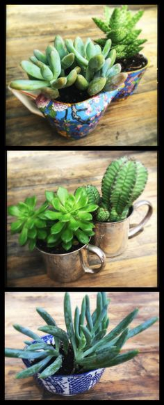 """Alternative creative outlets RULE!  It's a sentimental #succulent makin' day with family """"keepers""""...the silver cups were baby gifts for my kiddies from Mom & Dad. The cream and sugar are Grandma's and two of my most treasured possessions. The blue and white bowl is from a mom/daughter trip to Burma. Now out and enjoyed!"""