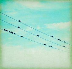 Birds on a Wire Mint Green Photograph Urban City Print