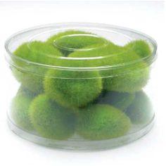 Moss Chunks (12 Green Moss Chunks) from Koyal Wholesale